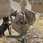 dog-with-soldier