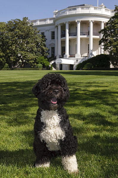 Presidential Dogs
