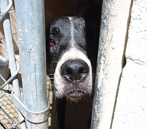 Animal Shelter Needs Dog Food