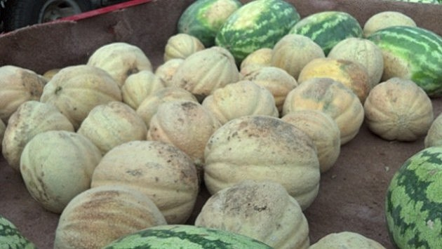 Old Time Farmers Market Cantaloupe