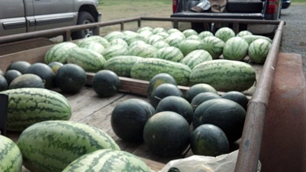 Old Time Farmers Market Melons