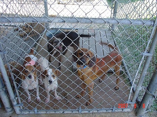 Smith Dog Raid 2007 (2)