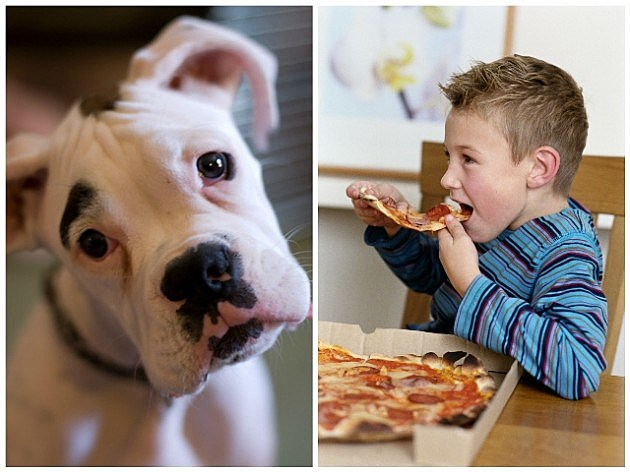 Boxer puppy and boy eating pizza