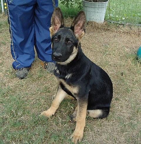 dog adoption event