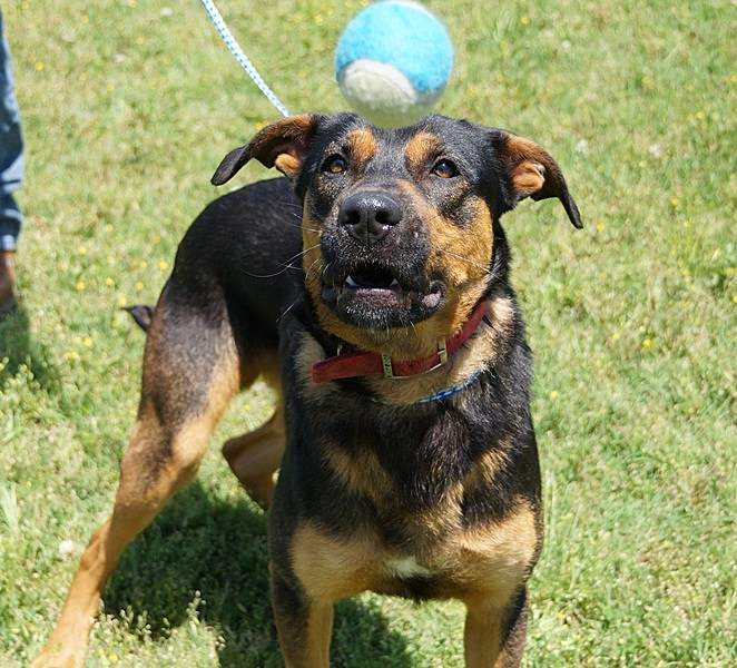 Bobby - Provide a Pet a Pad Mimi Campbell-McDaniel/Townsquare Media