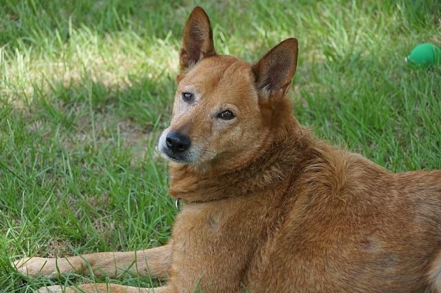 Gina - Shelter Dog