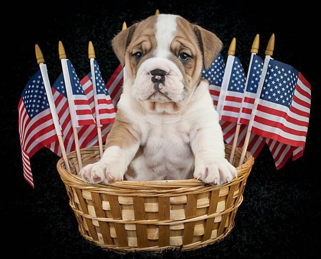 U.S.A. Puppy